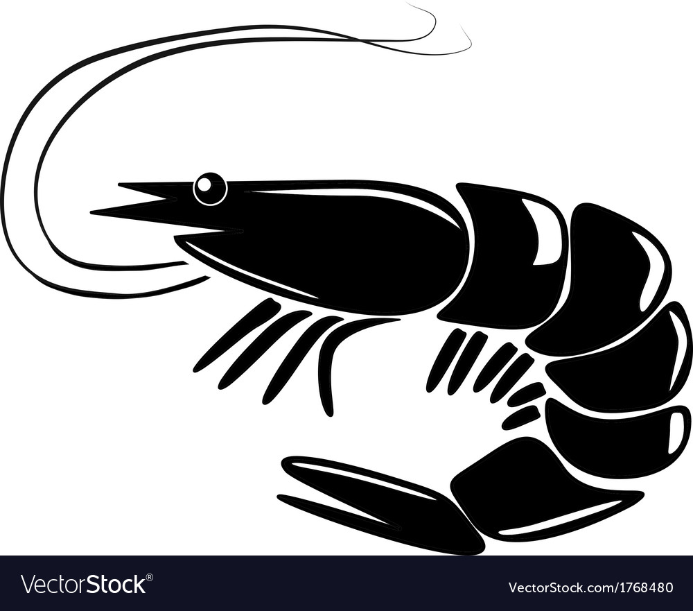 Prawn vectors and photos - free graphic resources