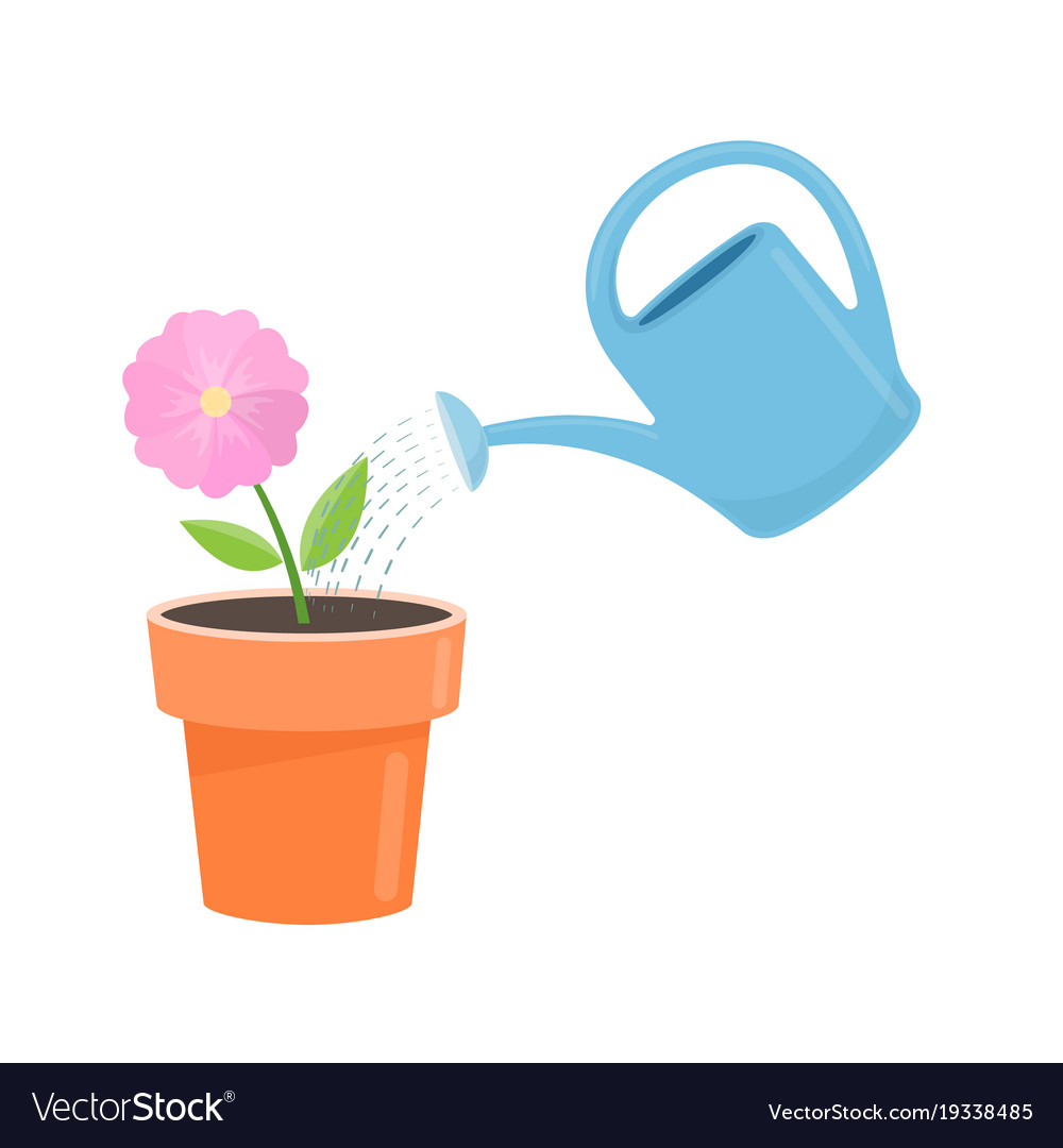 Potted flower and watering vector image  sc 1 st  VectorStock & Potted flower and watering Royalty Free Vector Image
