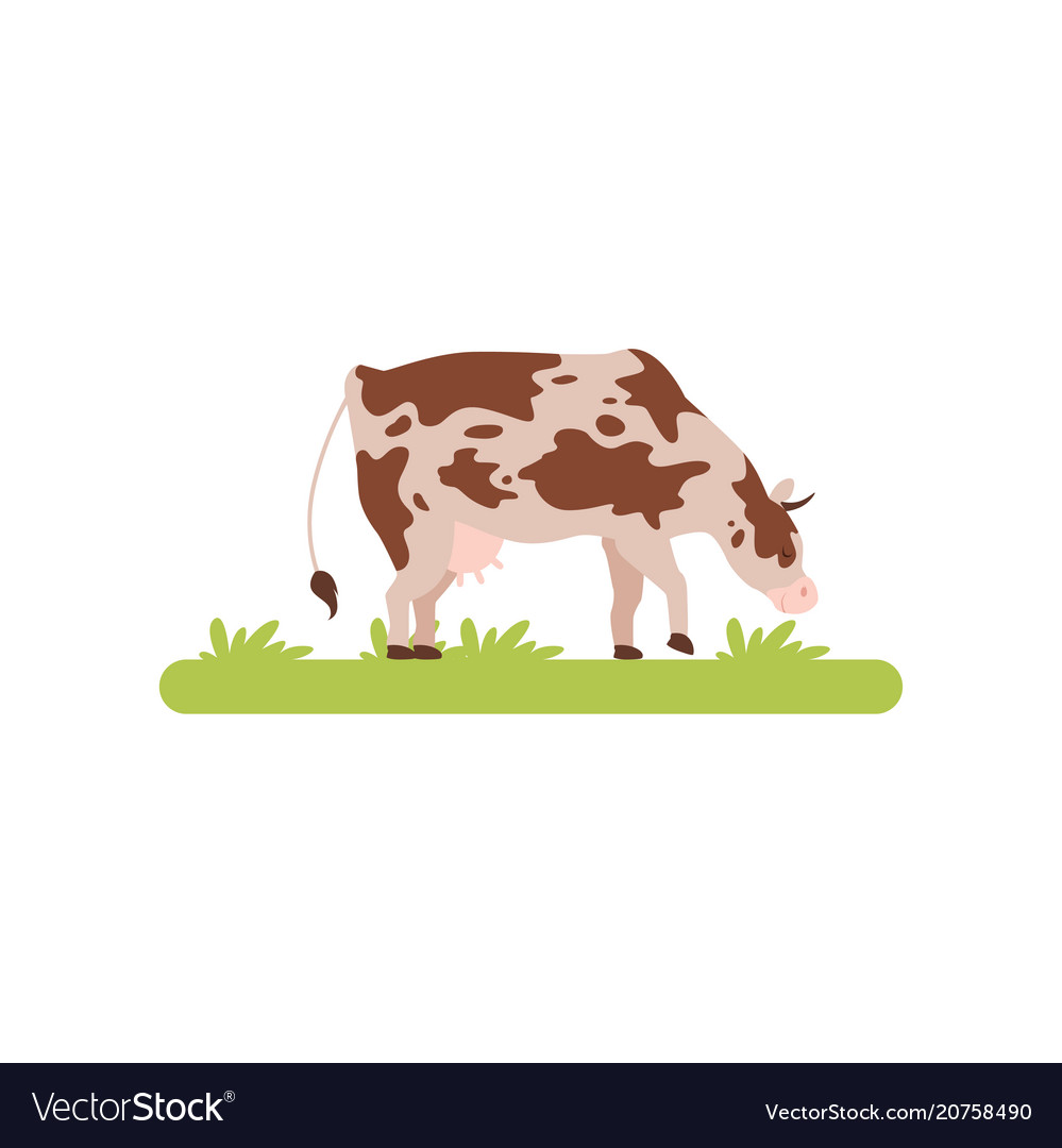 Spotting cow grazing in green meadow