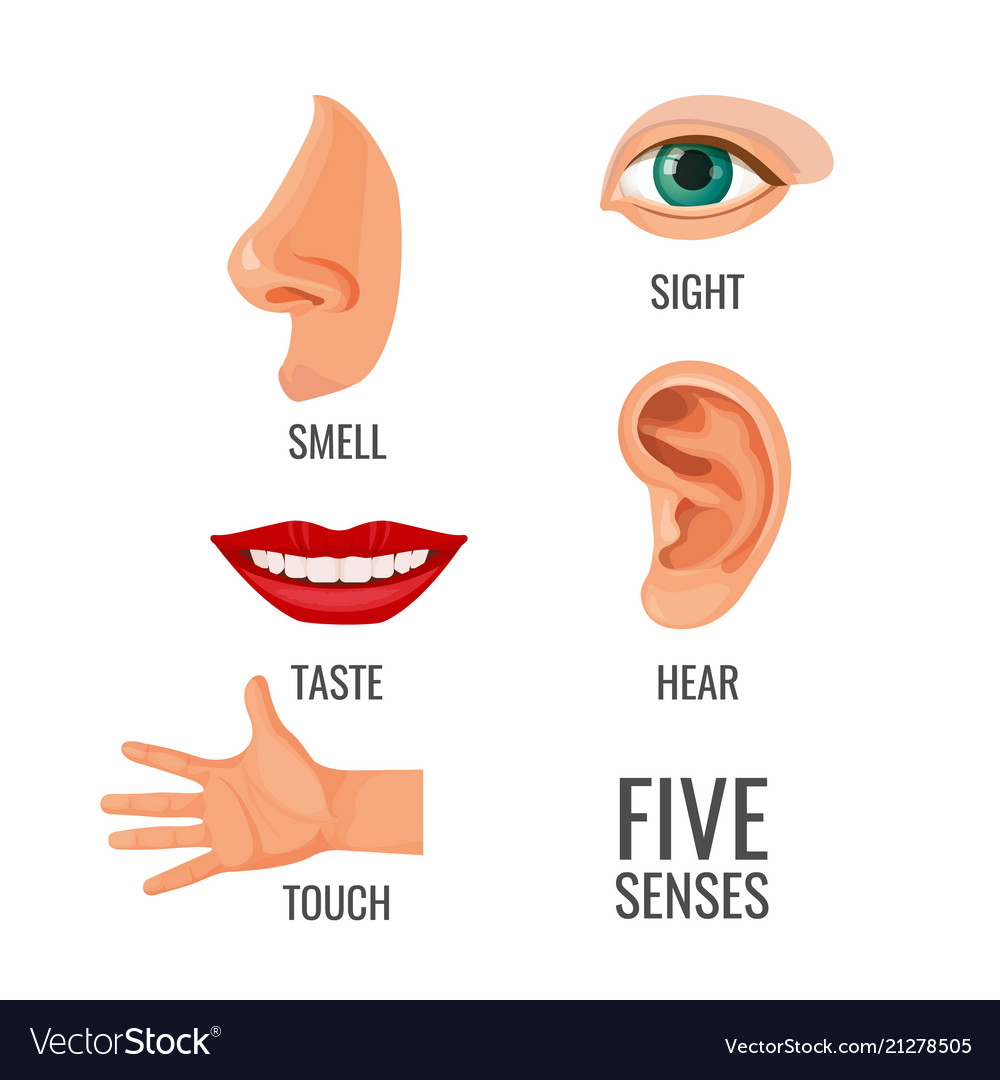 Body Parts And Five Senses Vector Images 47