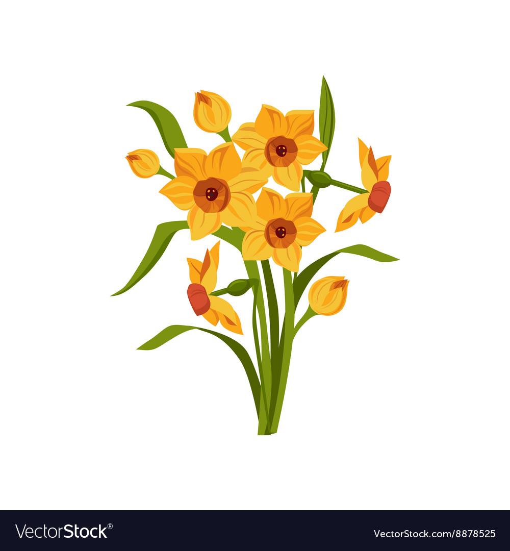 Daffodil Hand Drawn Realistic