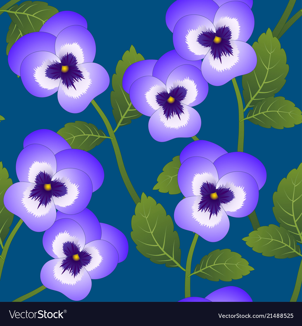 Violet viola garden pansy flower on indigo blue