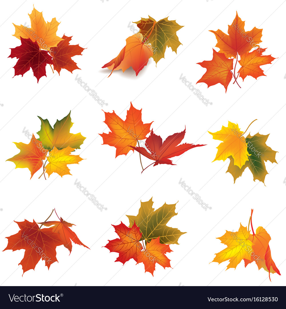 Autumn icon set fall leaves and berries nature