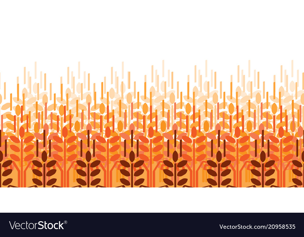 Wheat ears pattern agriculture background wheat