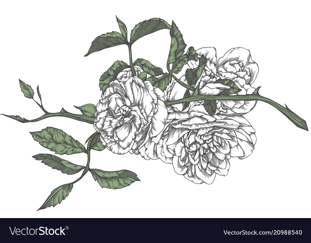Hand Drawn Rose In Sketch Style Royalty Free Vector Image