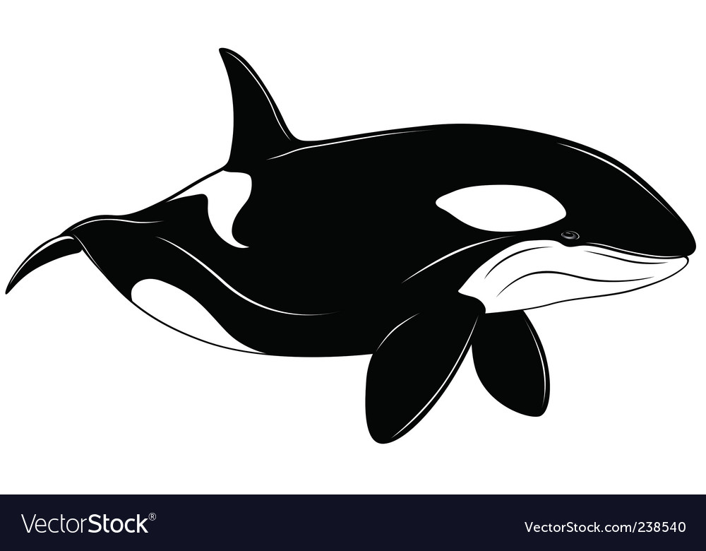 Vector Killer whale represented in the form of a tattoo. Keywords: