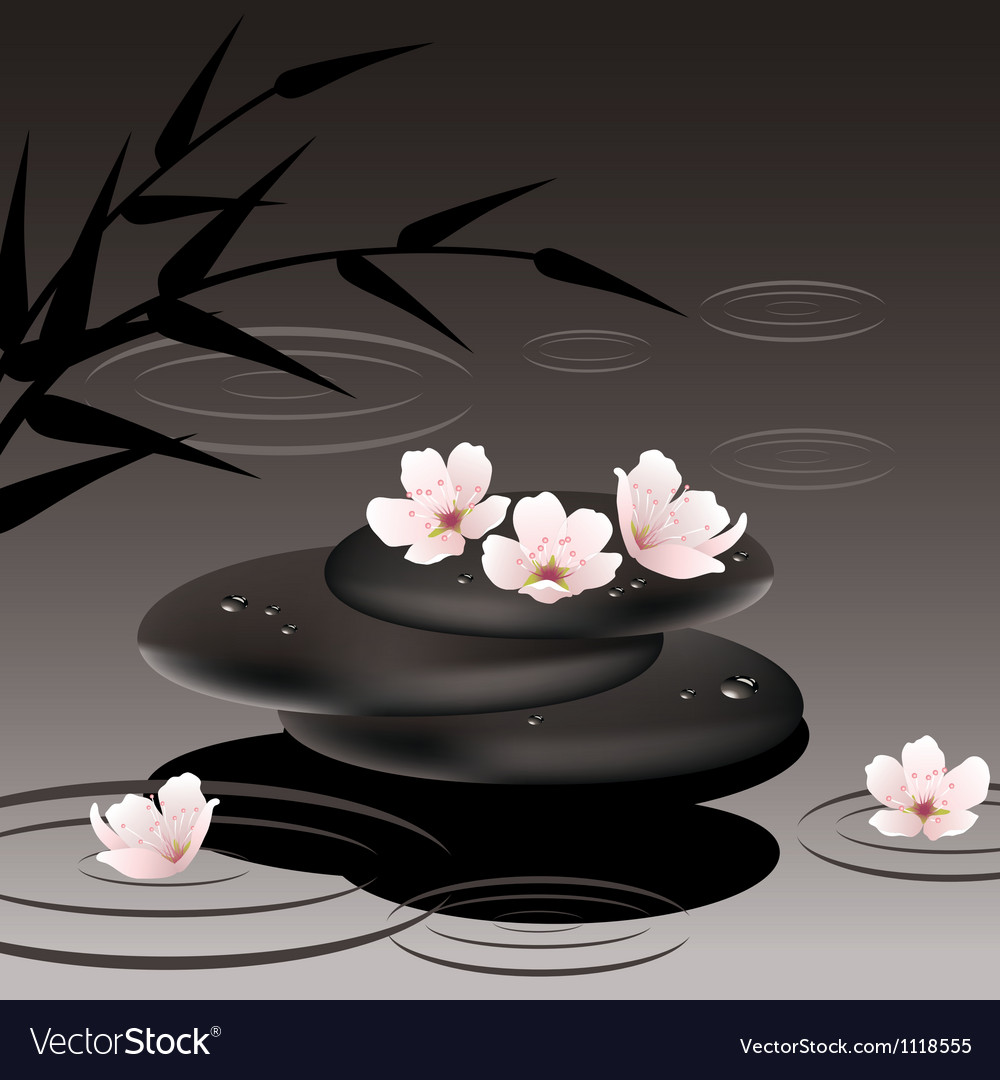 Zen stones and cherry flowers vector image