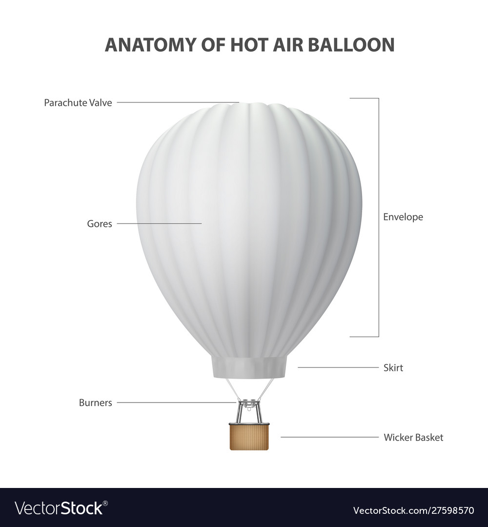 Anatomy hot air balloon isolated on white