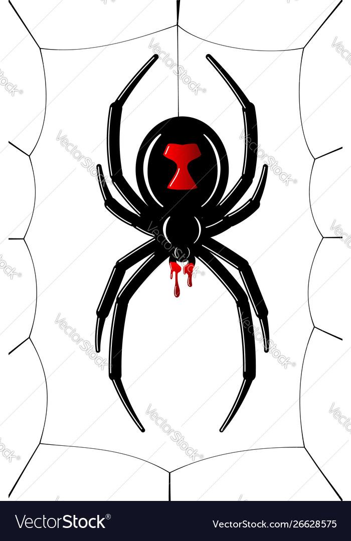 Spider Black Widow Cobweb Red Black Spider 3d