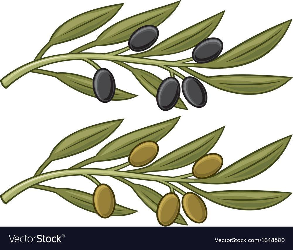 Olive branch olive leaf