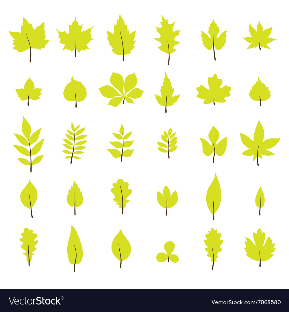 Set of autumn leaves Leaf collection in flat style