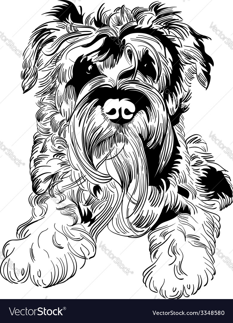 Sweet dog Miniature Schnauzer breed hand drawing vector image