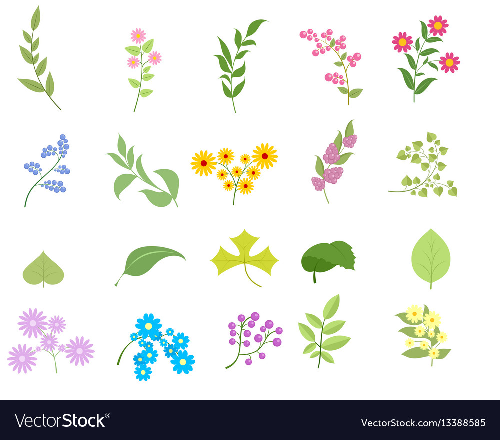 Flowers and leafs set vector image