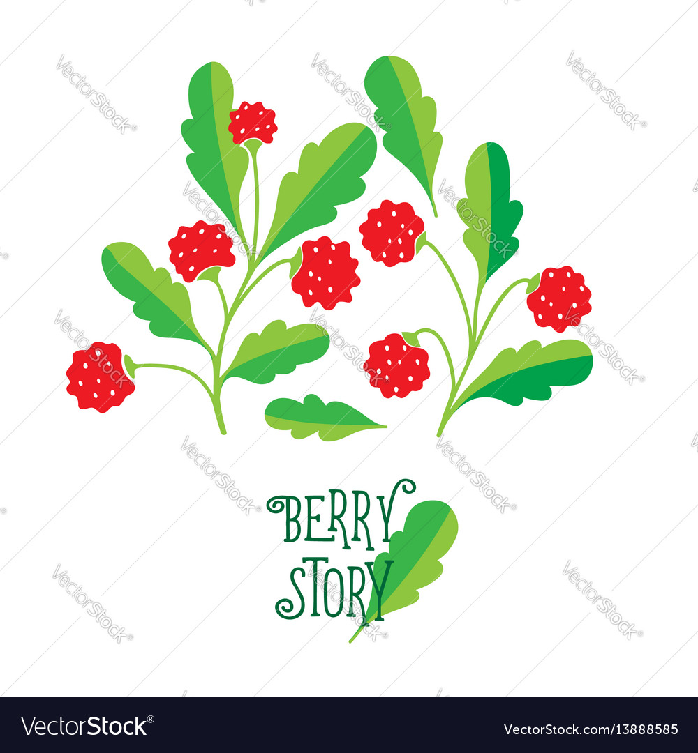 Hand drawn painting berry on white background vector image