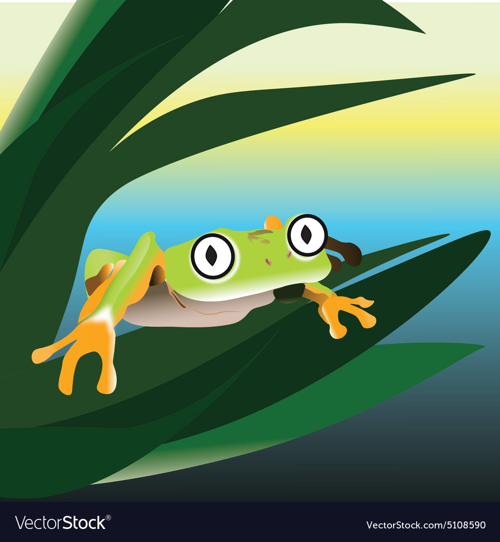 Frog sitting on a leaf in the swamp