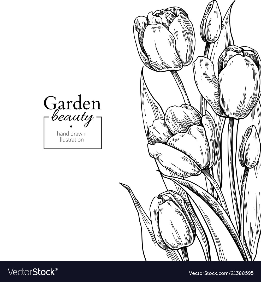 Tulip flower and leaves drawing border