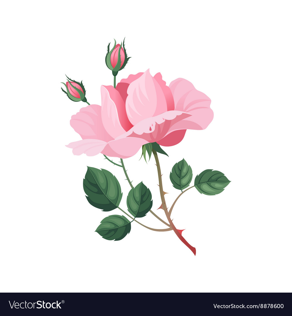 Rose Hand Drawn Realistic