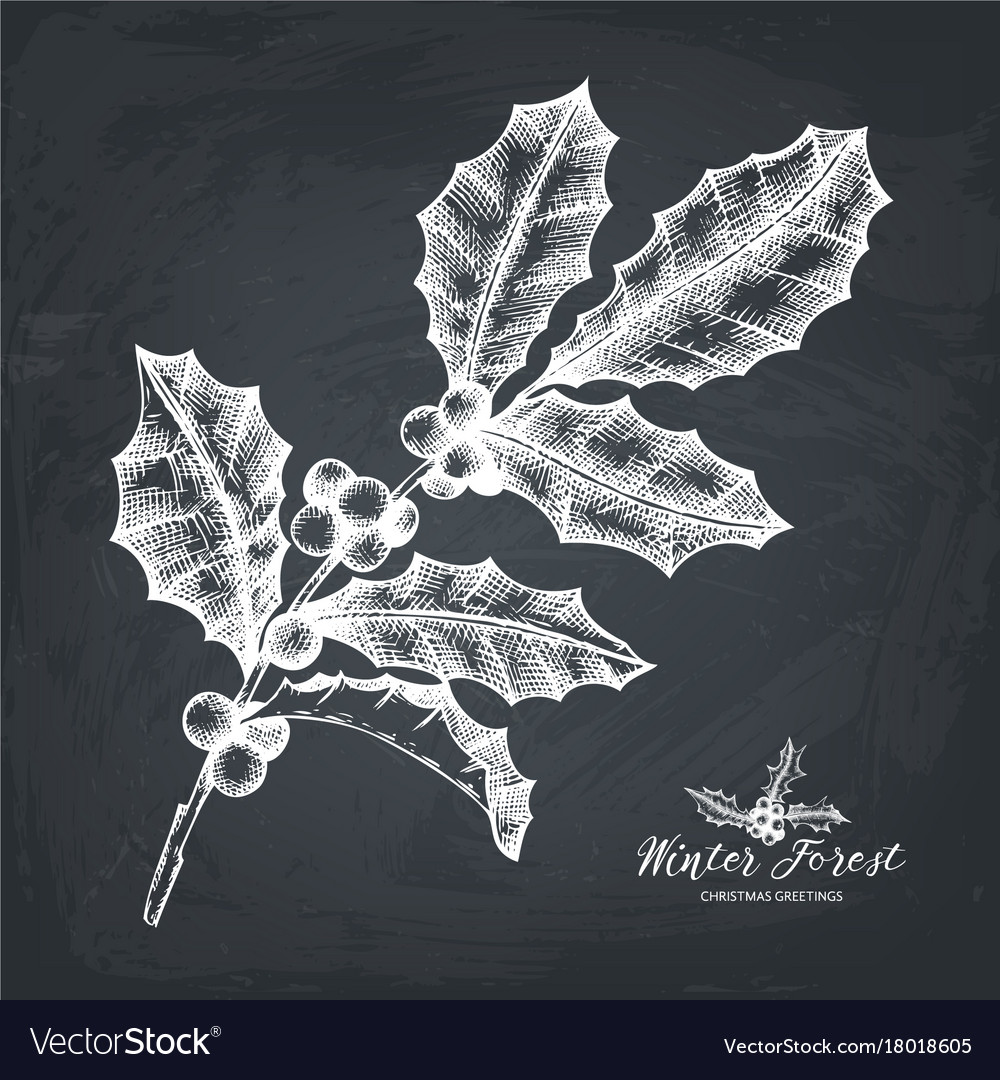 Hand drawn holly berries