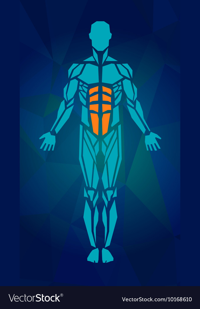 Polygonal Anatomy Of Male Muscular System Human Vector Image