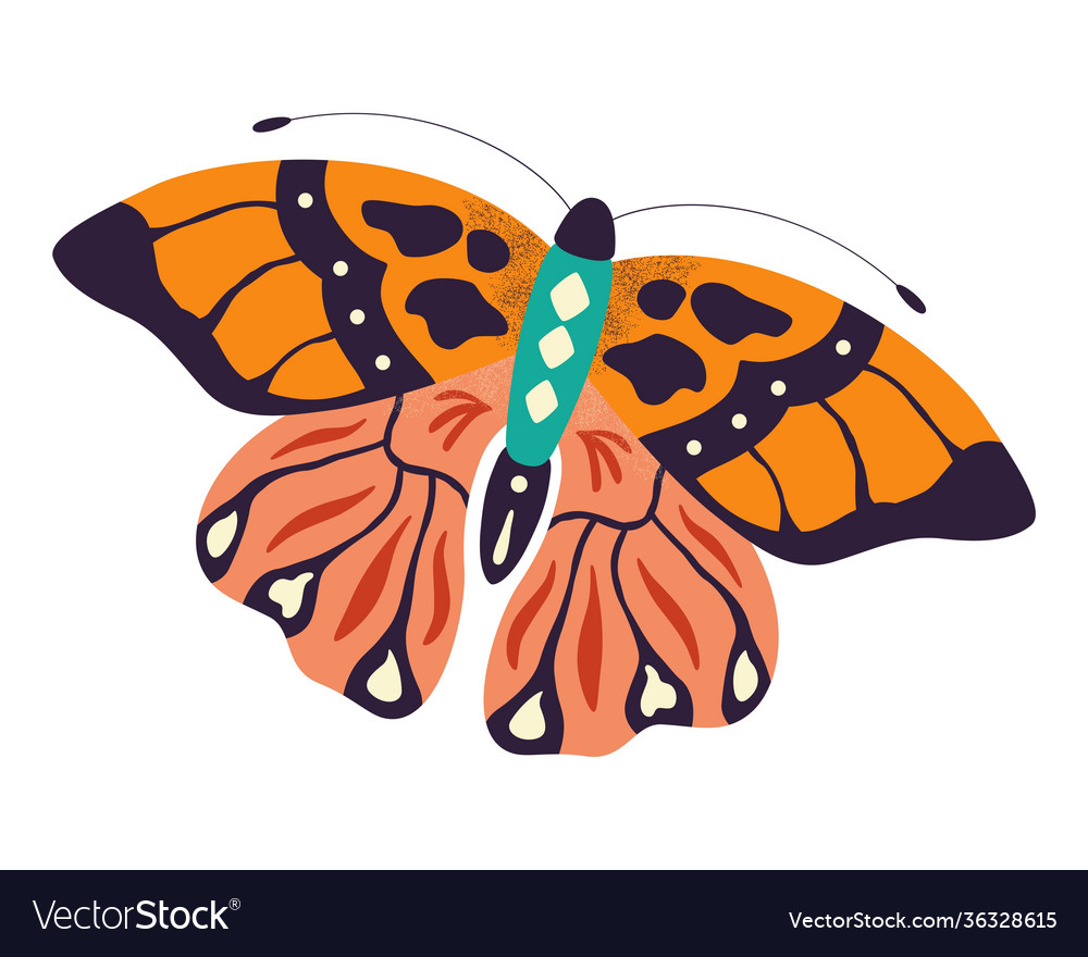 Colorful hand drawn butterfly on white