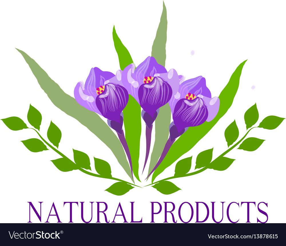 Natural organic food bio eco labels and shapes