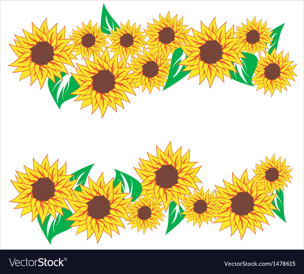 sunflower background images choice image wallpaper and