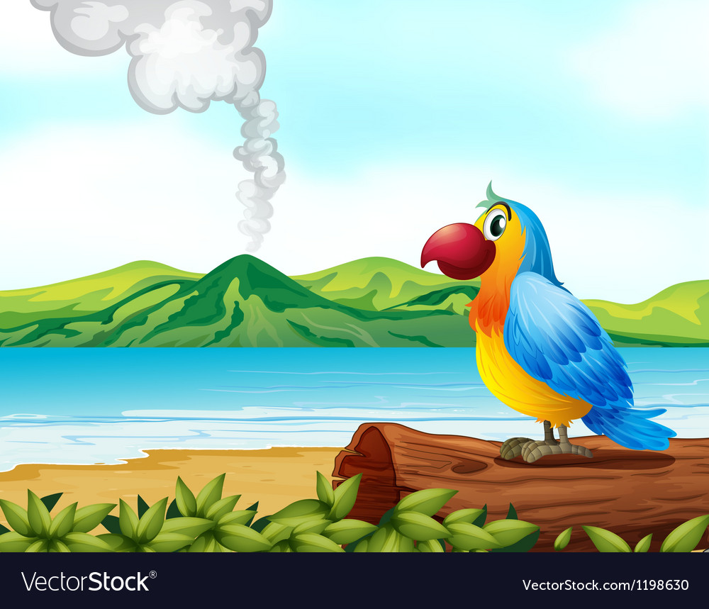 A colorful parrot at the beach vector image