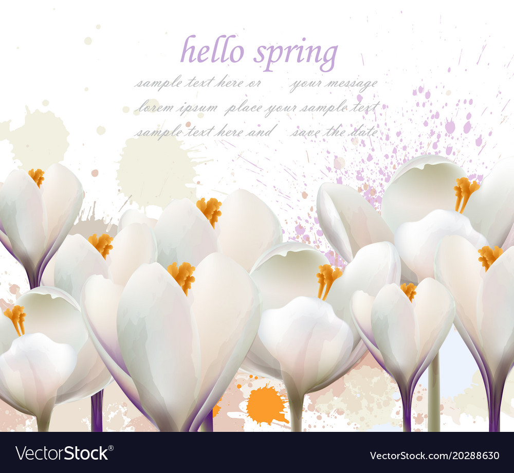 Hello Spring White Flowers Card Watercolor Vector Image