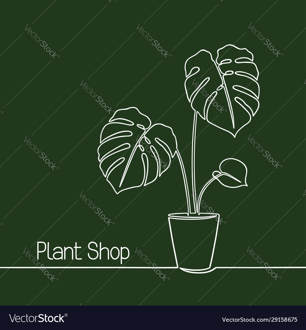 Monstera line art