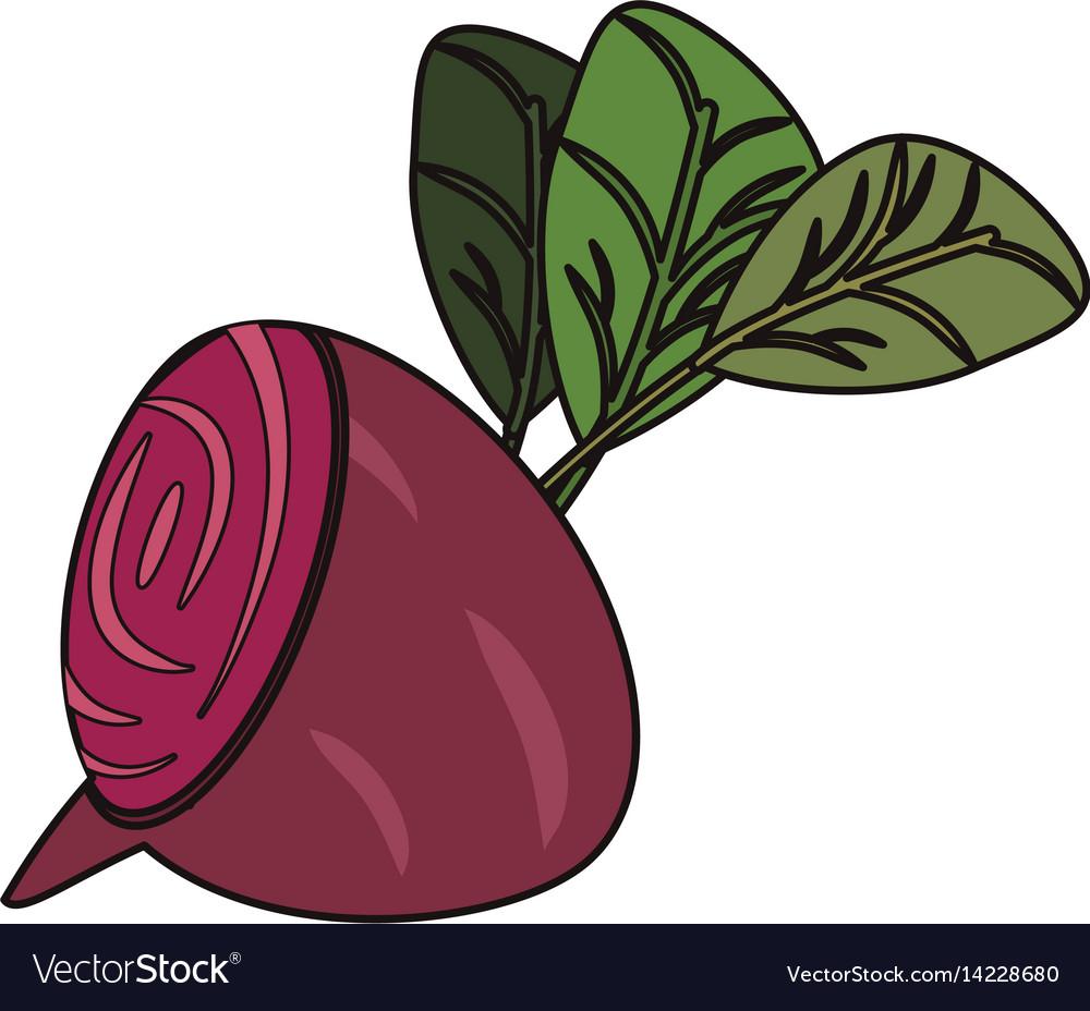 Beetroot vegetable food fresh