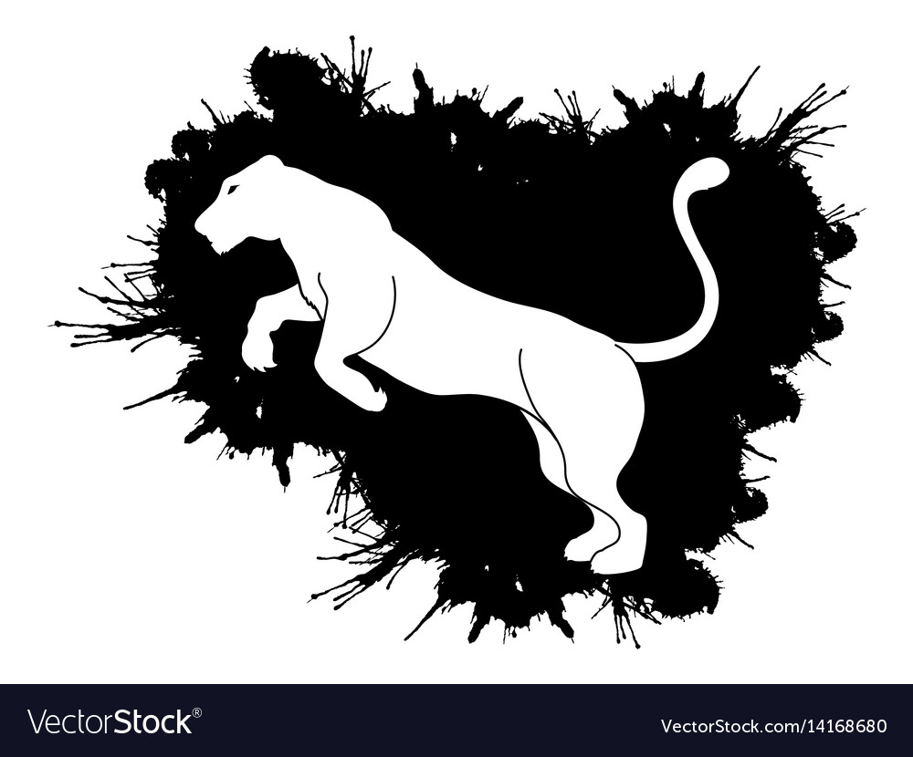 Panther or lioness jumping