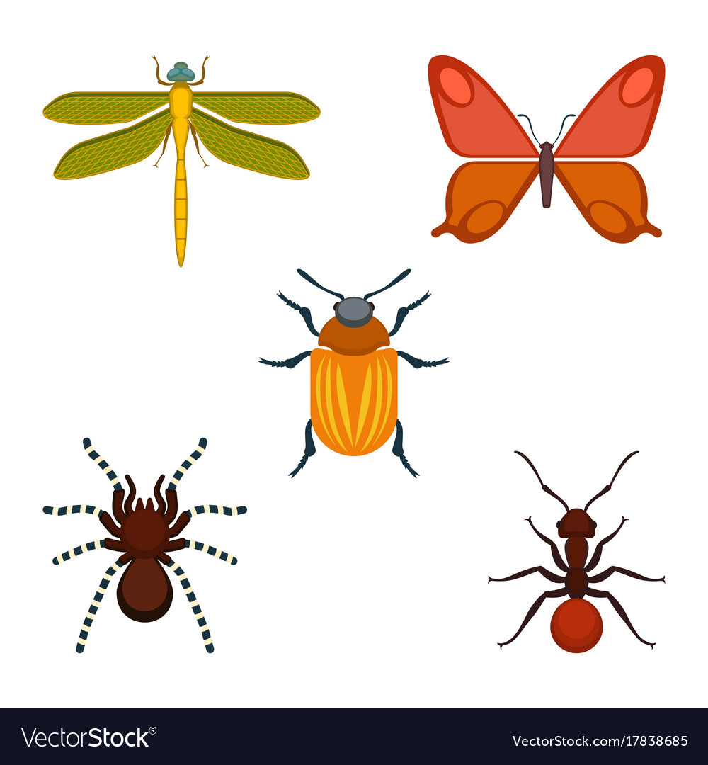 Collection bugs and insects on