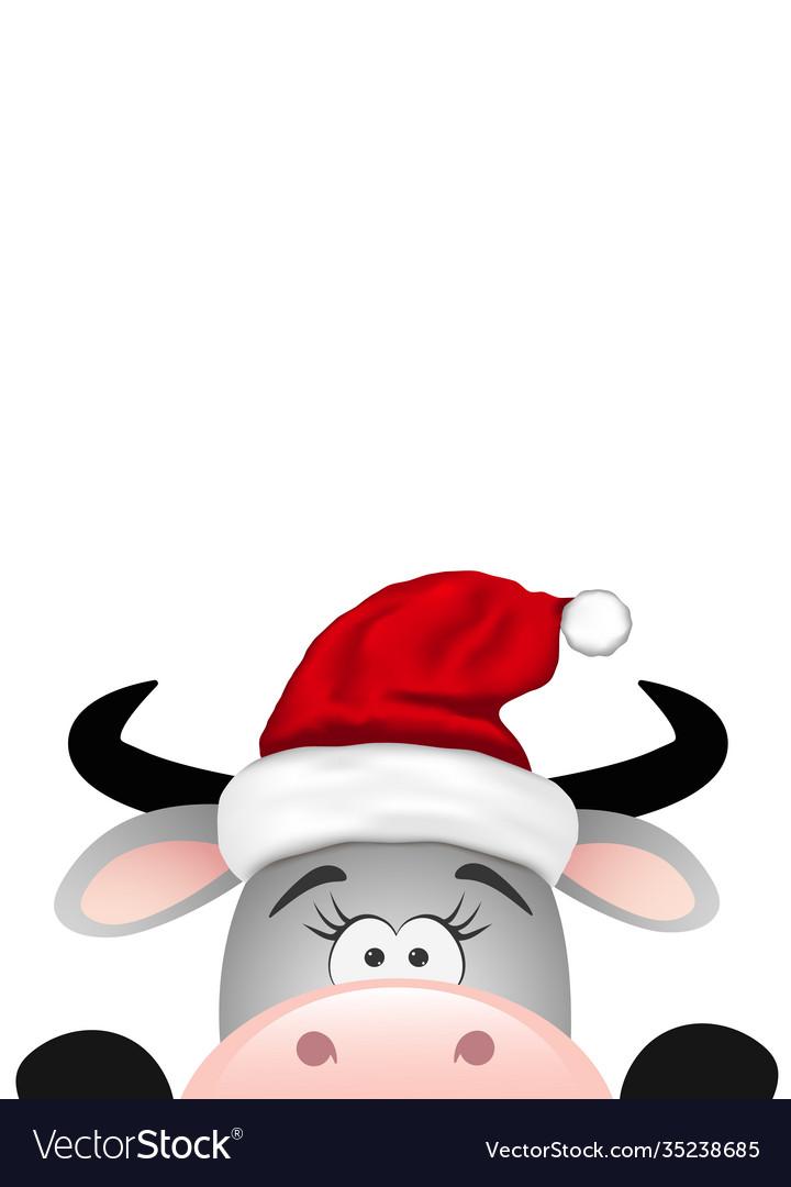 Funny gray bull on white background