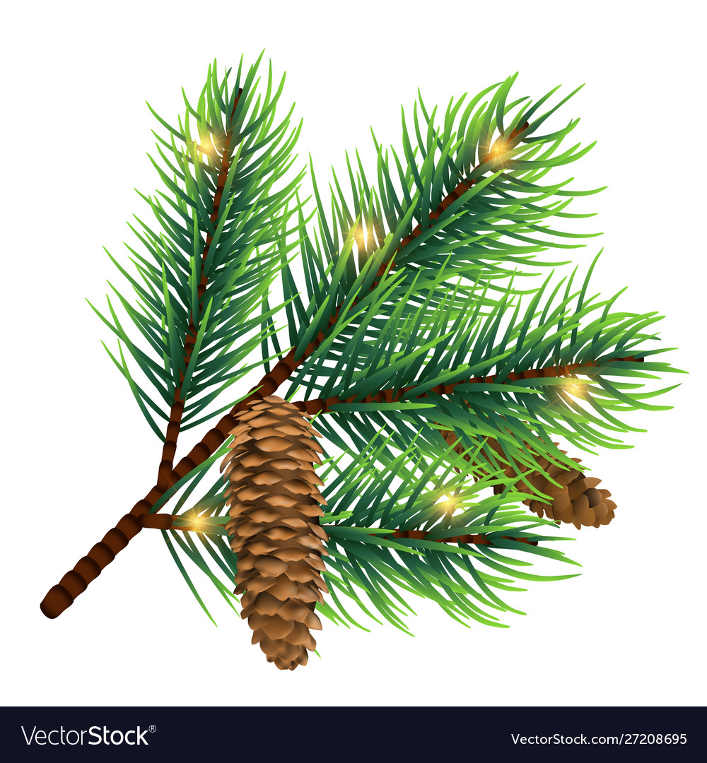 Realistic fir tree branch with cone and