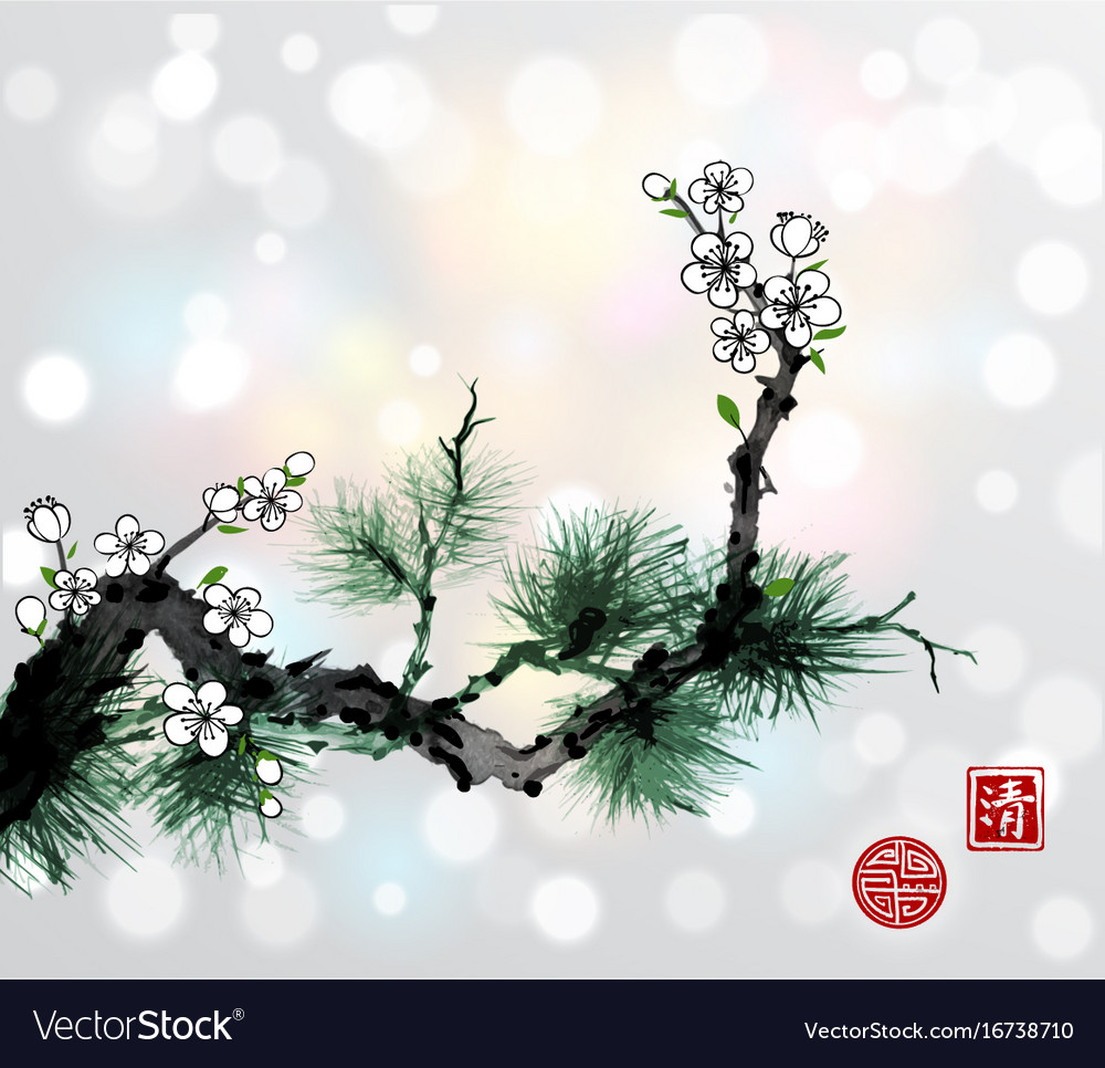 Green pine tree branch and white sakura cherry vector image