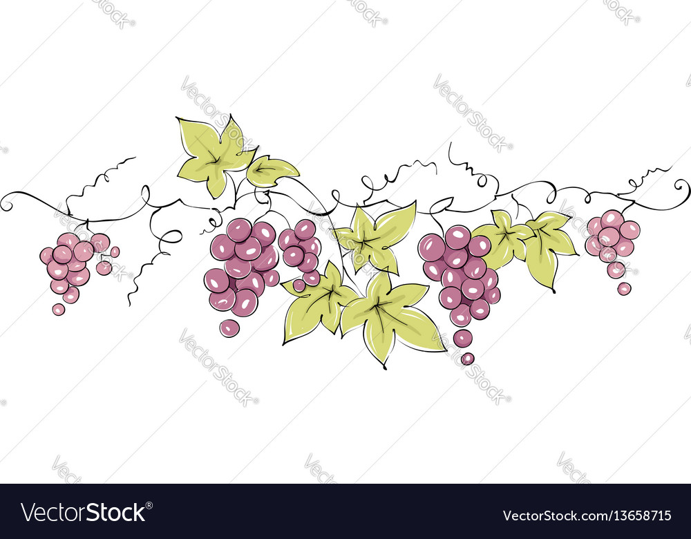 Design elements - vine vector image