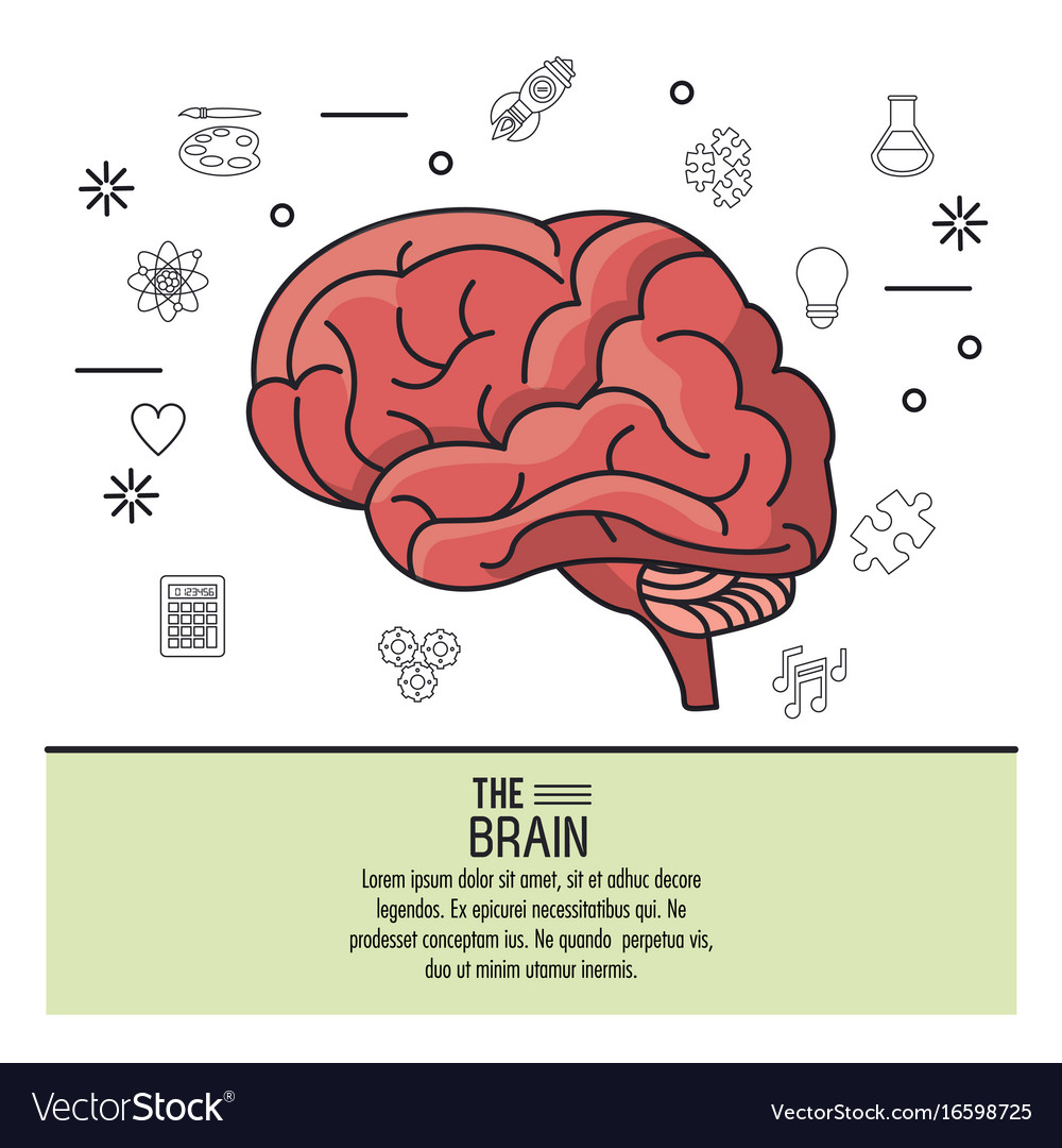 Colorful poster the brain with monochrome icons in