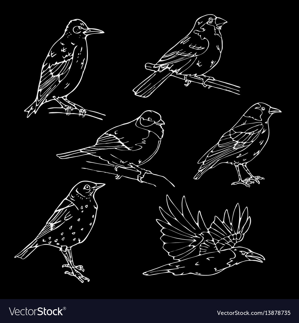 Birds engraved style stamp seal simple sketch vector image