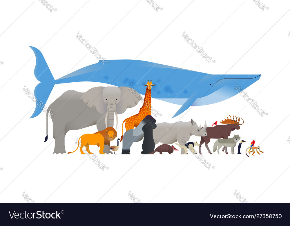 Wild animal cartoon collection isolated background