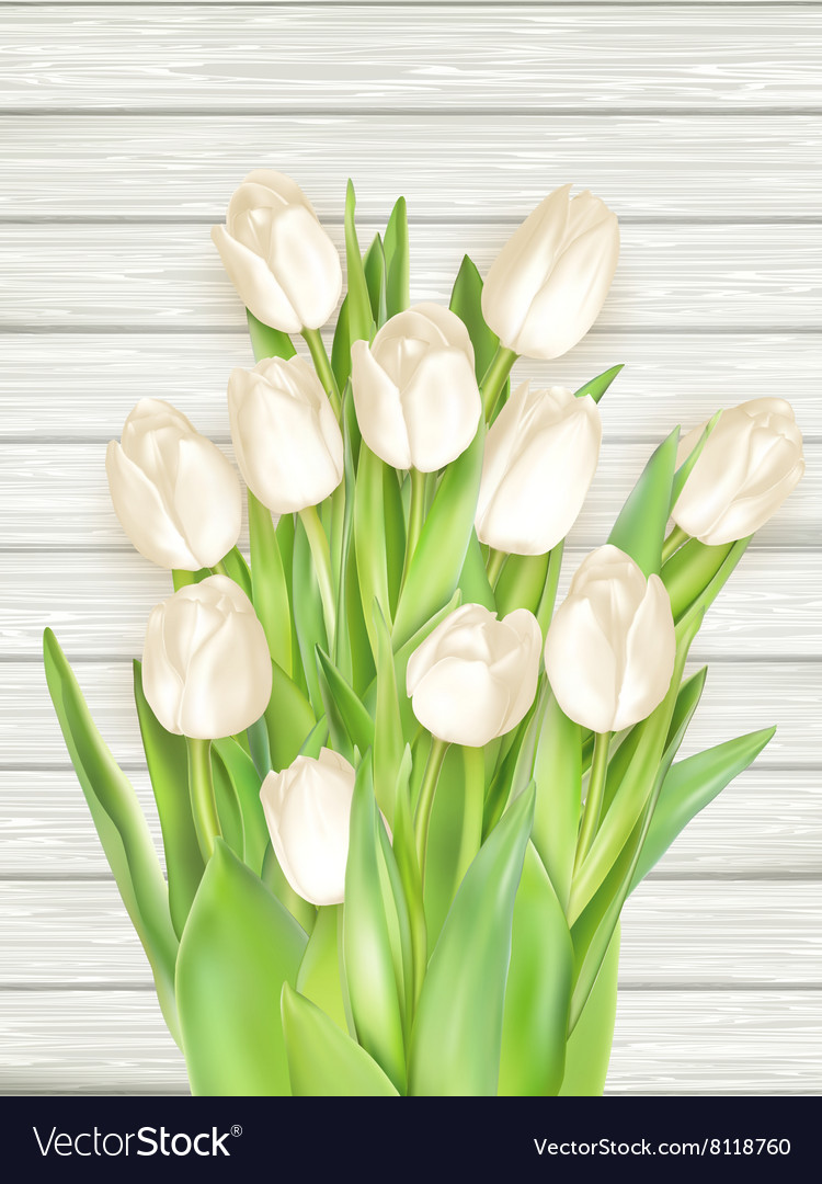 White tulips on light wooden background EPS 10 vector image