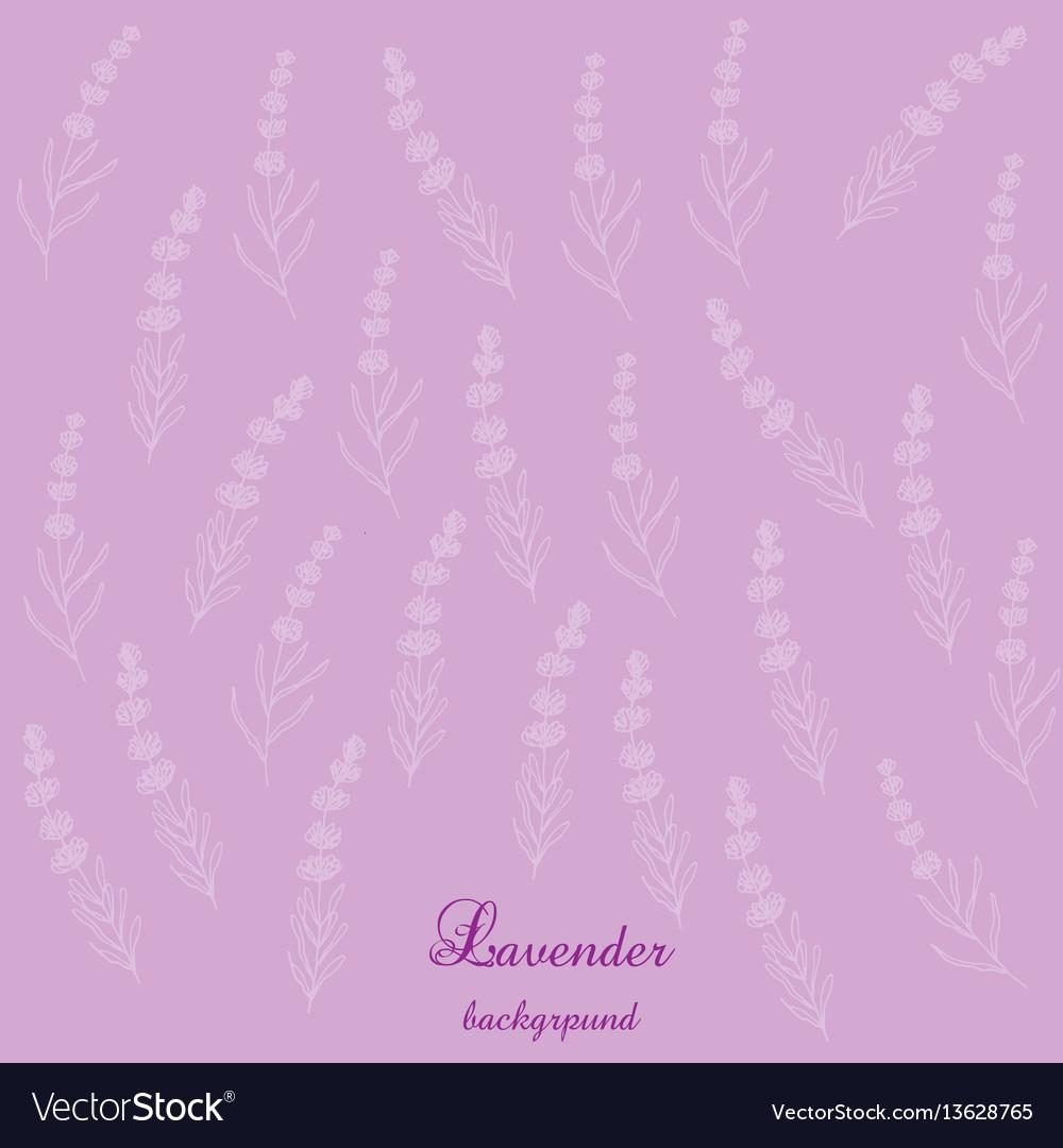Lavender flowers bsckground