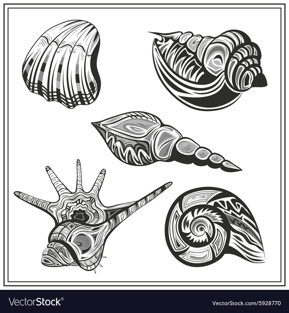 Set black and white seashells