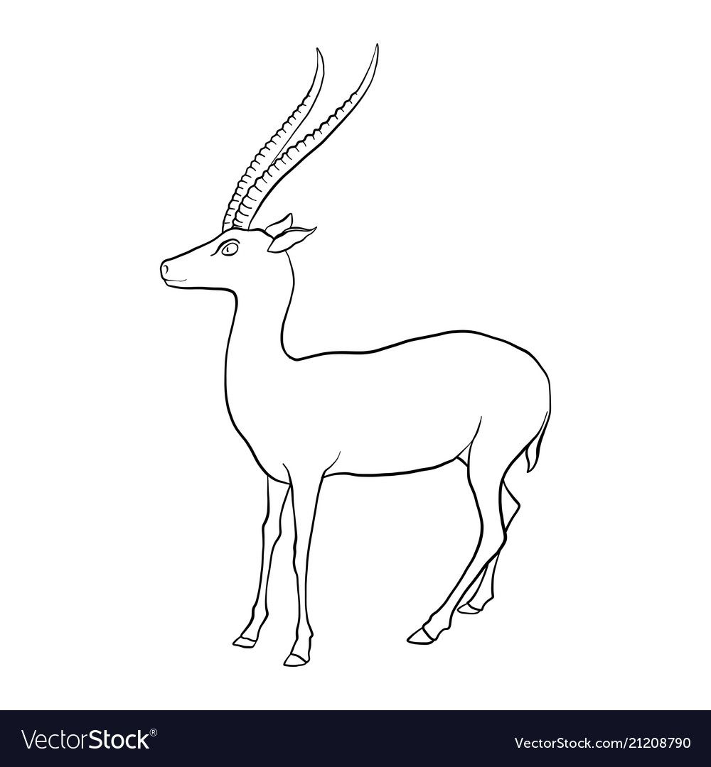 Drawing antelope