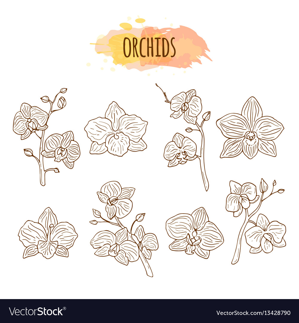 Orchid flowers hand drawn set