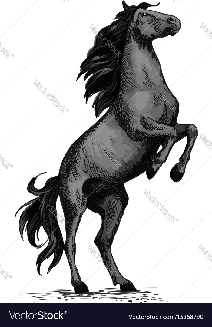 Wild Horse Racer Rearing Sketch Royalty Free Vector Image