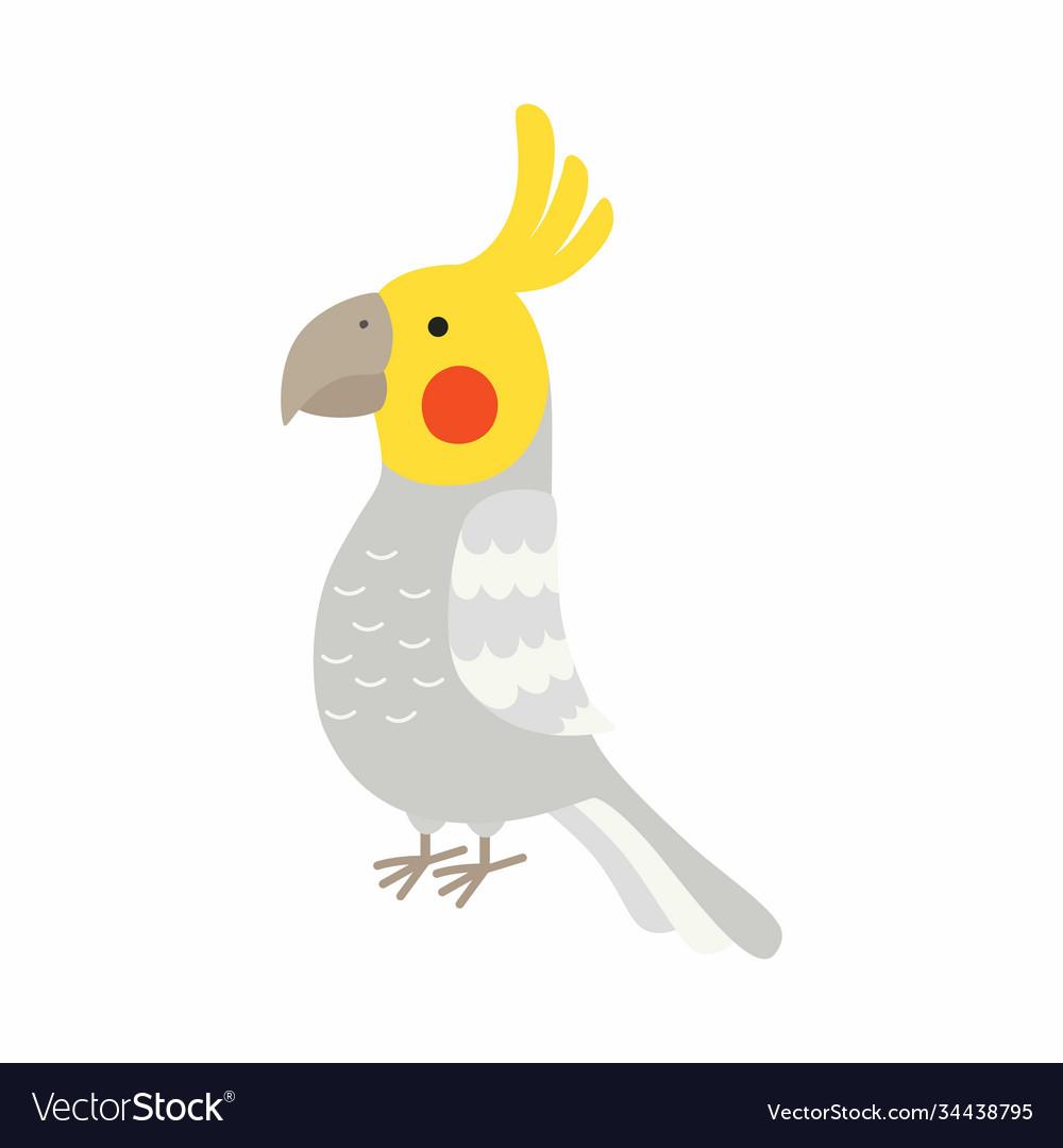 Adult parrot normal grey cockatiel nymphicus