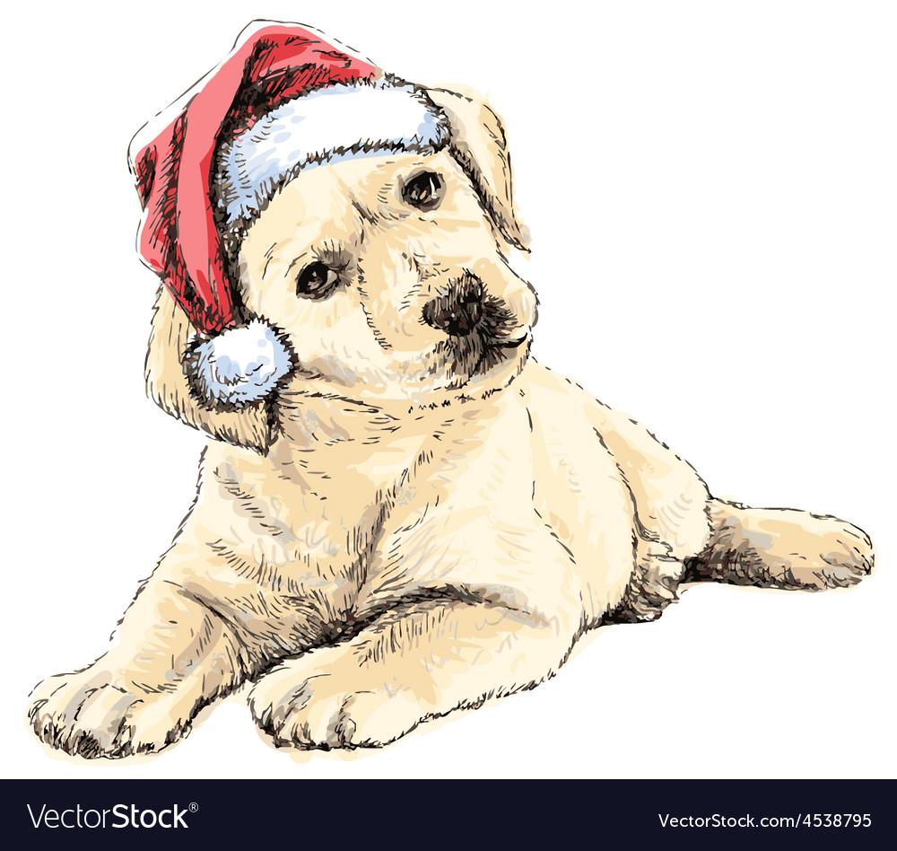 Labrador Retriever puppy vector image