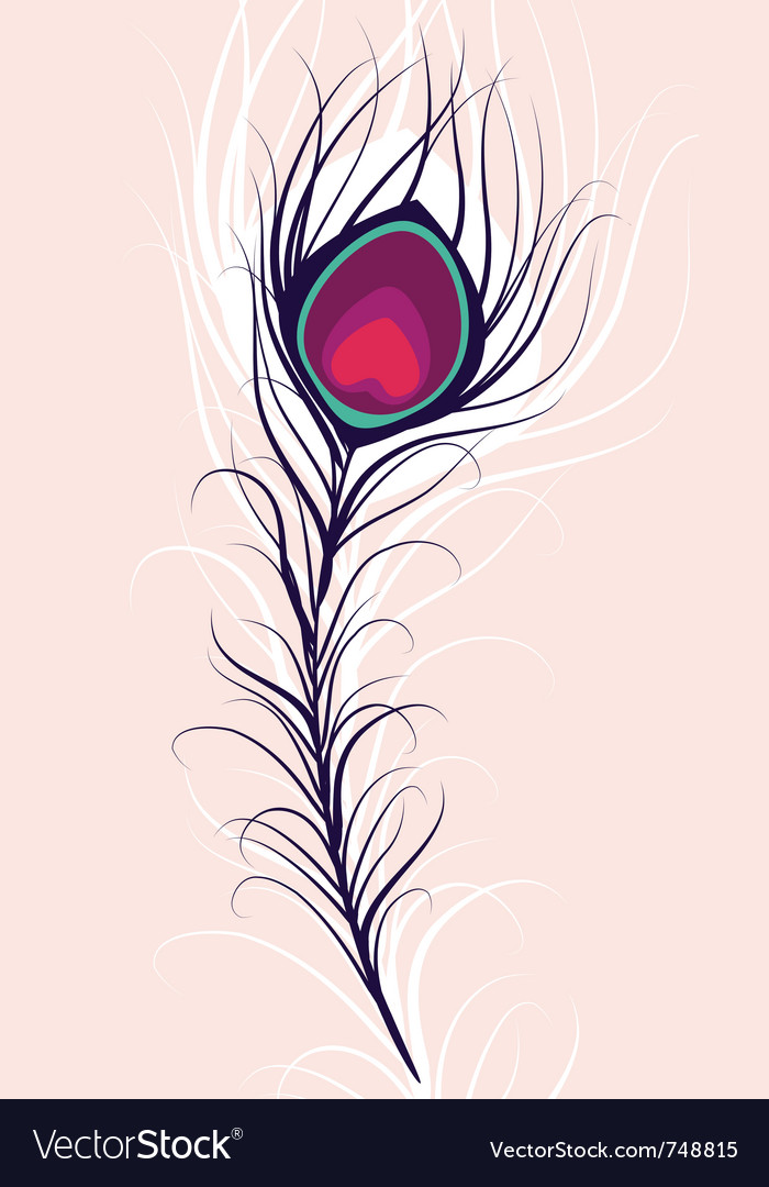 Beauty peacock feather vector image