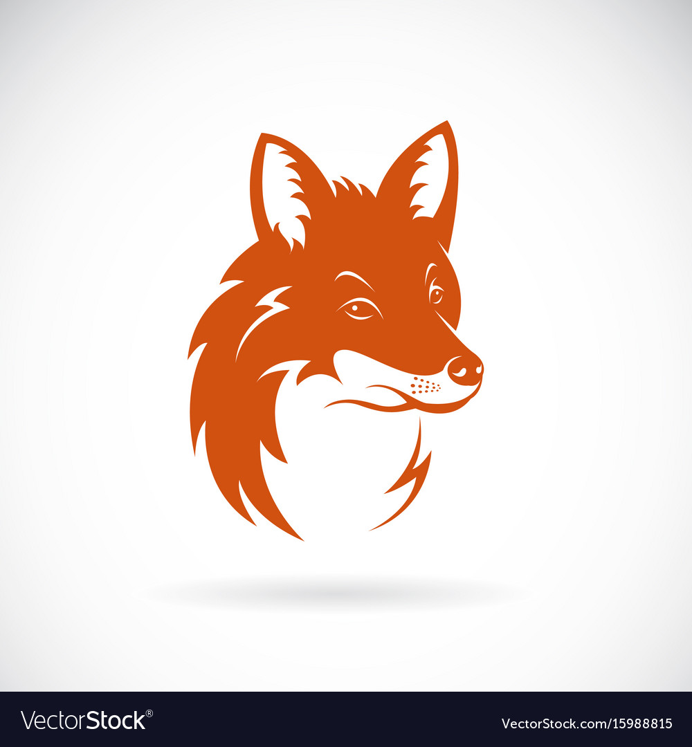 Fox head on white background wild animals