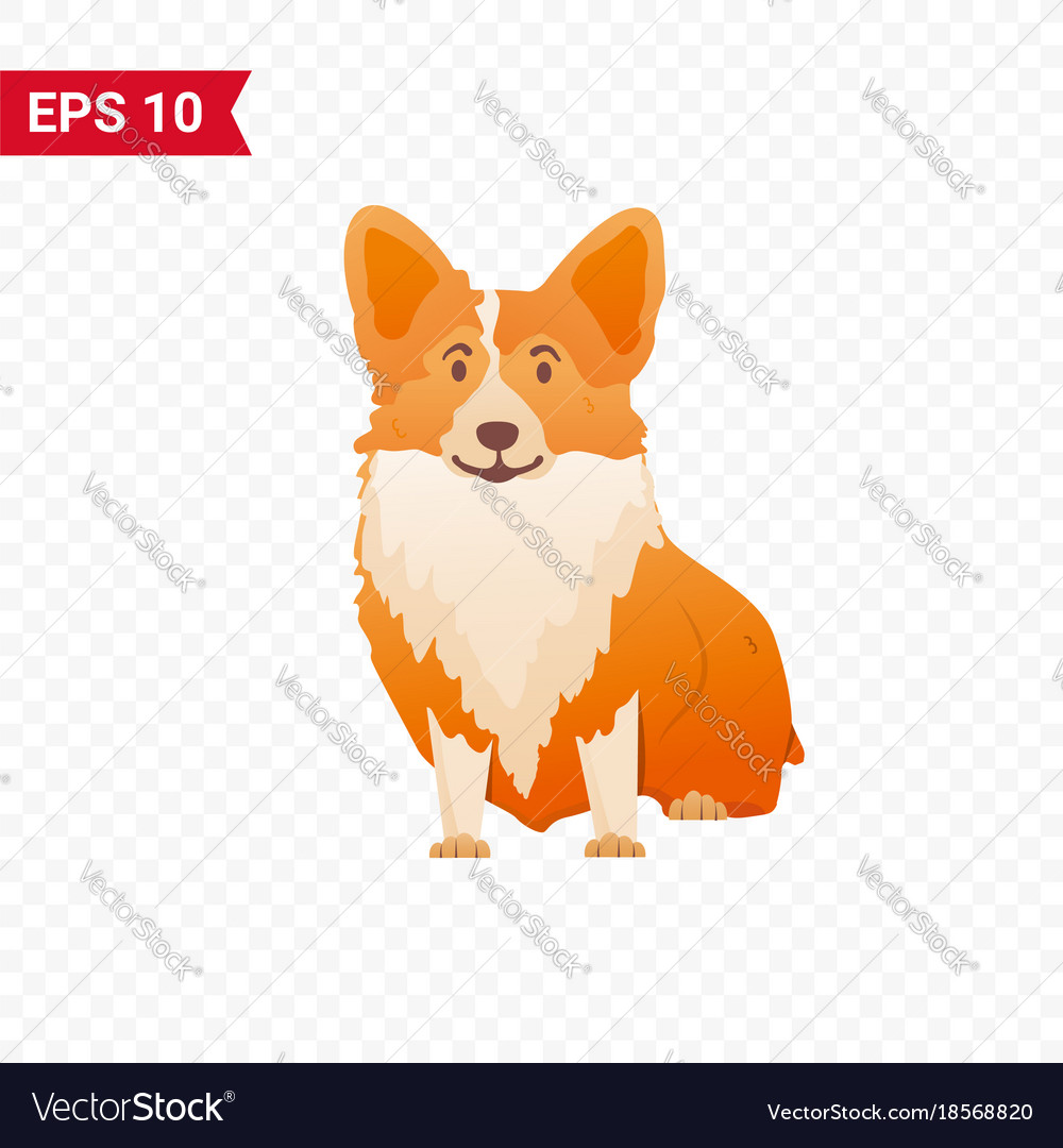 Cute corgi sits on an isolated layer
